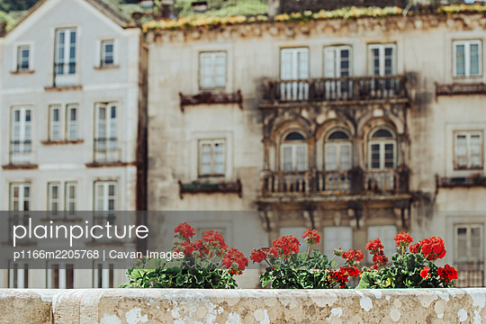 Decorative city flowers on background of historical buildings - p1166m2205768 by Cavan Images