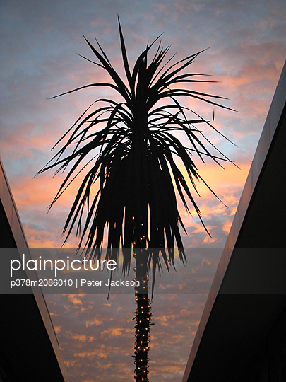 City Palm - p378m2086010 by Peter Jackson