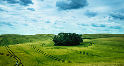 Scenic view green farmland and stand of trees, Brandenburg, Germany - p301m2075651 by Sven Hagolani
