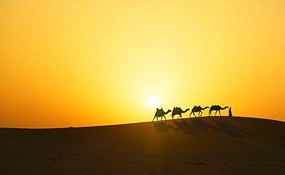 Camel caravan in desert at sunset, Dubai, United Arab Emirates - p429m1021976f by Lost Horizon Images