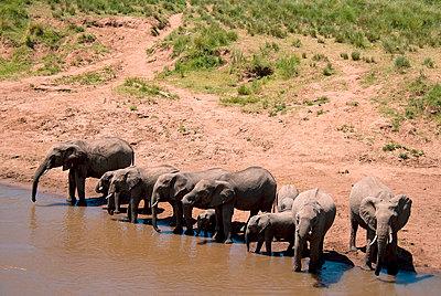 Masai Mara Nationalpark - p5330115 von Böhm Monika