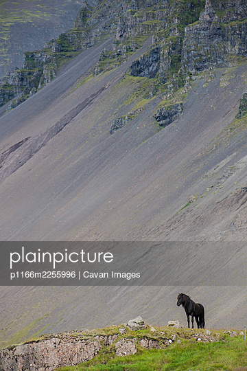 Icelandic horse on top of a hill - p1166m2255996 by Cavan Images