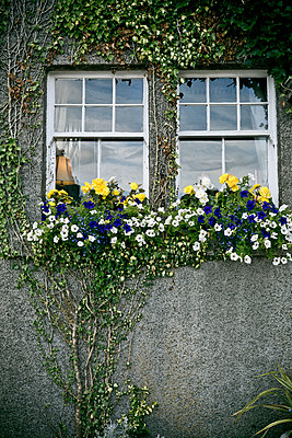 Windows - p445m931931 by Marie Docher