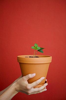 Gerade eingepflanzt - p4540377 von Lubitz + Dorner