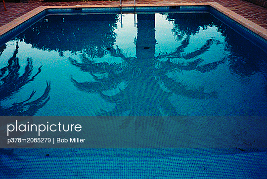 Palm tree in swimming pool - p378m2085279 by Bob Miller