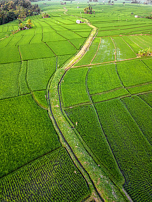 Indonesia, Bali, Aerial view of rice fields - p300m2042509 by Konstantin Trubavin