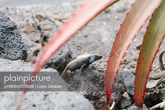 p1683m2272028 by Luisa Zanzani