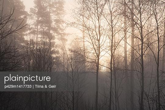 p429m1417733 von Tiina & Geir