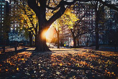 Sunrise on Upper East Side - p1290m1112674 by Fabien Courtitarat