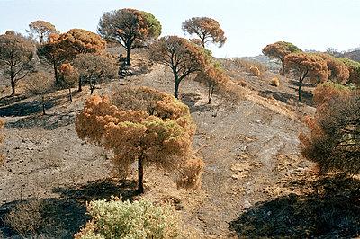 Waldbrandwüste - p2684253 von Stephan Sasek