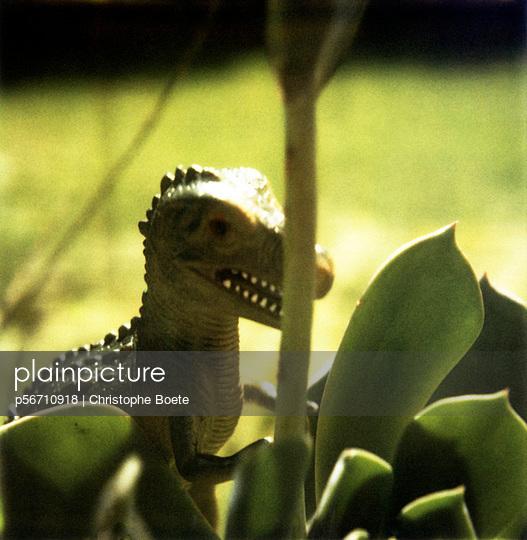 Hidden dinosaur - p56710918 by Christophe Boete