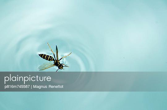 p816m745587 von Magnus Reneflot