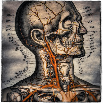Medical Illustration - p1154m1193284 by Tom Hogan
