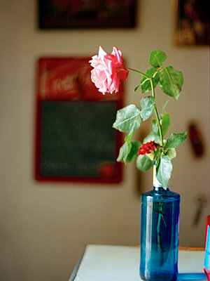 pink single stem rose in blue glass vase, Spain - p349m2167745 by Polly Wreford