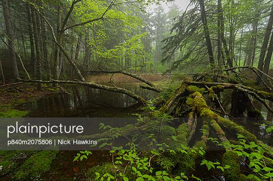 p840m2075806 von Nick Hawkins