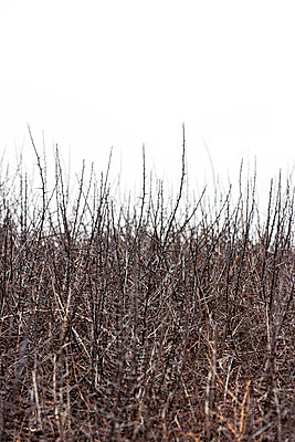 Dornengestrüpp - p248m989782 von BY