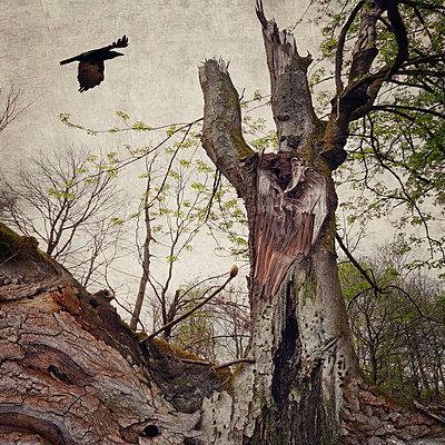 On Dark Wings Part - p1633m2220223 by Bernd Webler