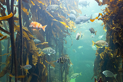 Two Oceans Aquarium, biodiversity - p1640m2246217 by Holly & John