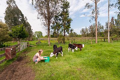 Girl feeding calfs - p1201m1040608 by Paul Abbitt