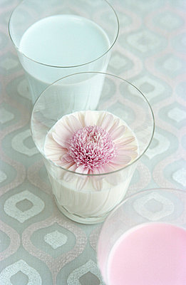 Flower swimming in milk - p1650026 by Andrea Schoenrock