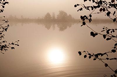 Morning fog - p533m1088384 by Böhm Monika