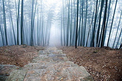 Bamboo Forest - p6692330 by Ben Miller