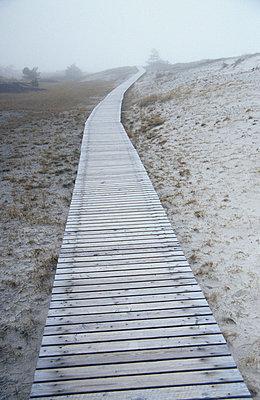 Steg, Wanderweg Nationalpark in der Vorpommersche Boddenlandschaft - p9791334 von Opelka