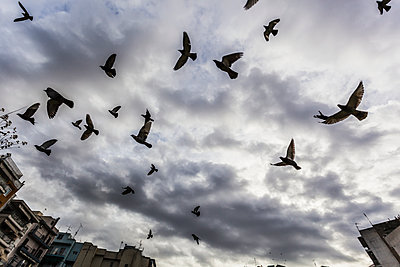 Silhouetted flock of birds flying against a cloudy sky; Thessaloniki, Greece - p442m1141573 by Reynold Mainse