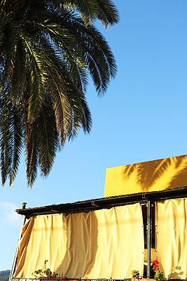 Palme auf la Palma - p1064m1558558 von Esmeralda