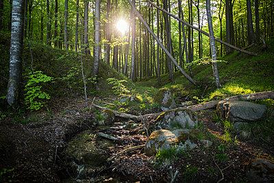 Germany, Mecklenburg-Western Pomerania, Ruegen, Jasmund National Park, Beech forest - p300m2059424 von Maria Maar