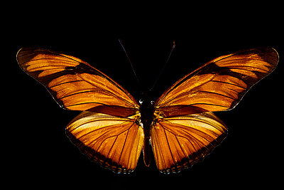 Butterfly with orange colours - p587m2115467 by Spitta + Hellwig