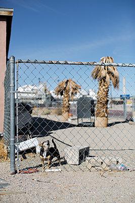 Barkign dog behind wire fence - p1134m1440745 by Pia Grimbühler