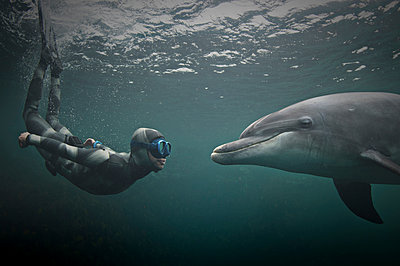 Woman freediving with bottlenose dolphin (Tursiops truncatus), Doolin, Clare, Ireland - p429m2019729 by George Karbus Photography
