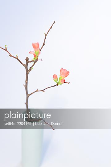 Springtime in a vase - p454m2204161 by Lubitz + Dorner
