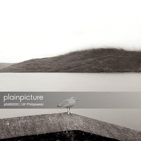 Einsame Möwe - p5450033 von Ulf Philipowski