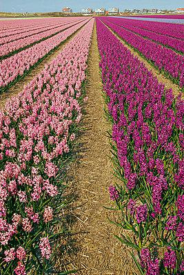 Blumenfelder - p4170017 von Pat Meise