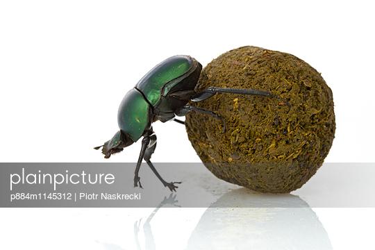 p884m1145312 von Piotr Naskrecki