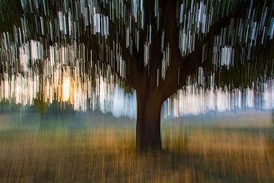Magic tree - p1659m2253861 by Somni Bergur