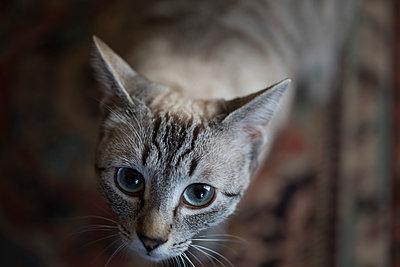 Cat's eyes - p445m1515109 by Marie Docher