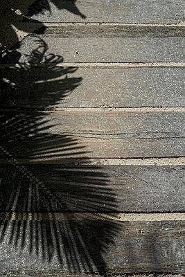 Shadow of a Palm Leaf - p938m754464 by Christina Holmes