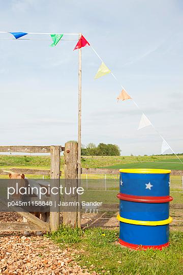 Pony guckt durch Lattenzaun - p045m1158848 von Jasmin Sander