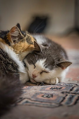 Cats hugging - p1402m2164177 by Jerome Paressant