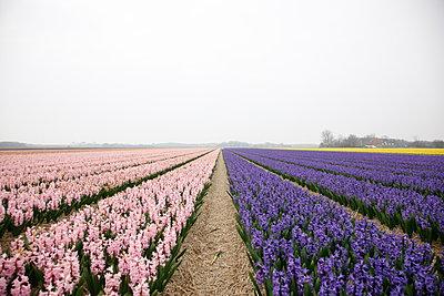 Texel - p707m1093265 by Sorin Morar