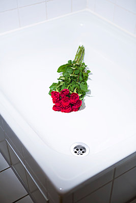 Roses in the shower - p1149m1474762 by Yvonne Röder