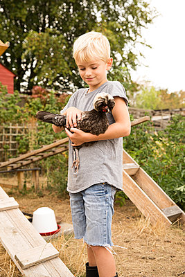 Boy holding Polish chicken at chickenhouse in garden - p300m2083761 von Michelle Fraikin