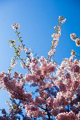 Blossoming - p756m813310 by Bénédicte Lassalle