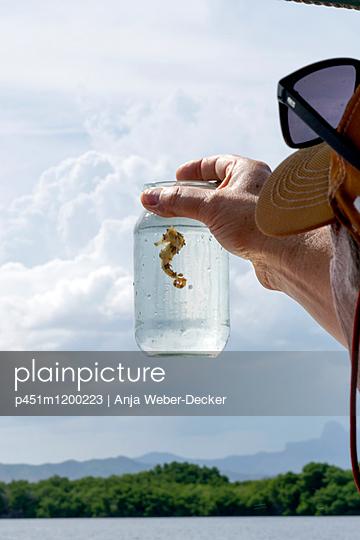 Seepferdchen im Glas - p451m1200223 von Anja Weber-Decker