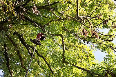 Klettern - p1222m1072133 von Jérome Gerull