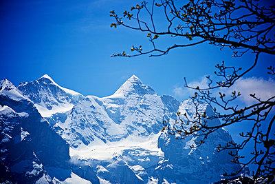 Schneeberge mit Zweig - p606m1462358 von Iris Friedrich
