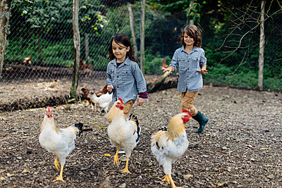 Two children chasing chickens on an organic farm - p300m2140725 by Sofie Delauw